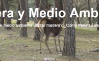 Blogmadera